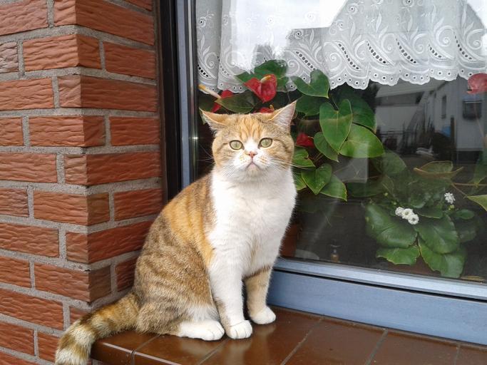 Mačka sedí pri okne.jpg